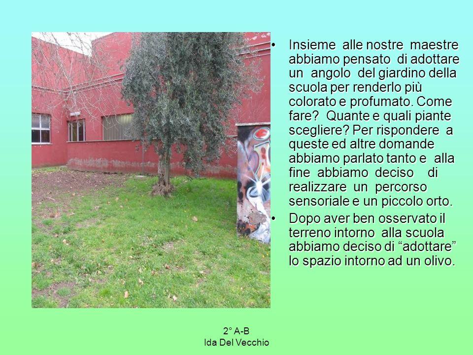 2° A-B Ida Del Vecchio Insieme alle nostre maestre abbiamo pensato di adottare un angolo del giardino della scuola per renderlo più colorato e profuma