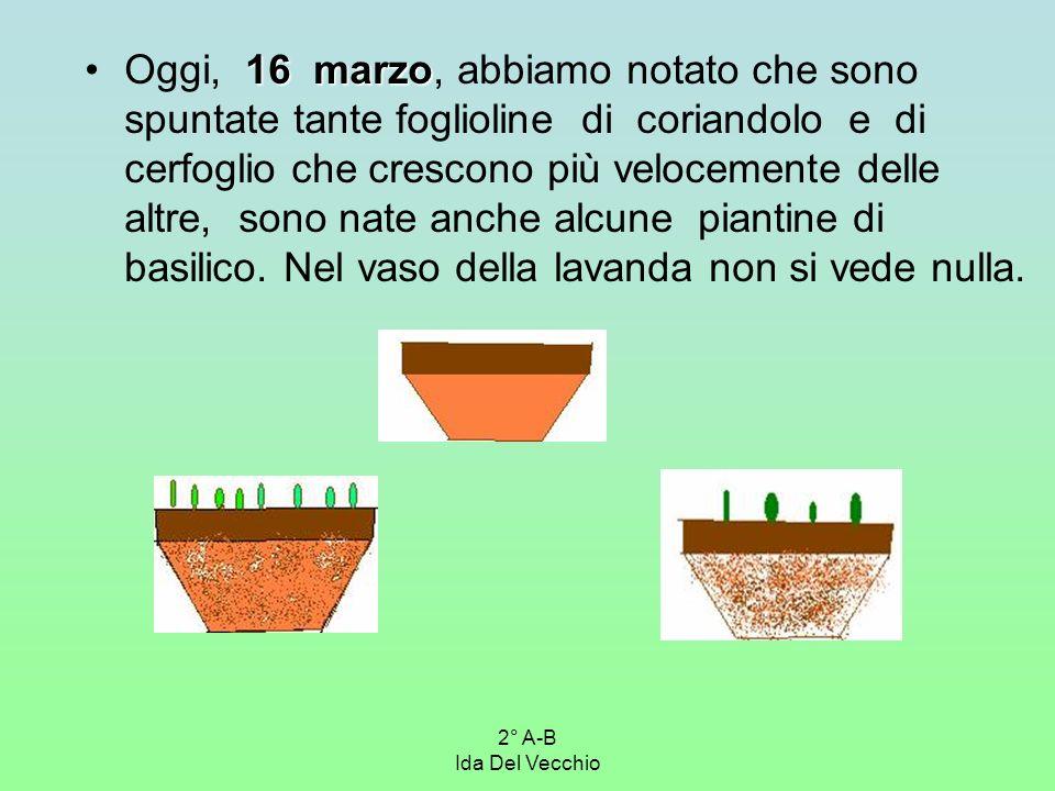 2° A-B Ida Del Vecchio 16 marzoOggi, 16 marzo, abbiamo notato che sono spuntate tante foglioline di coriandolo e di cerfoglio che crescono più velocem
