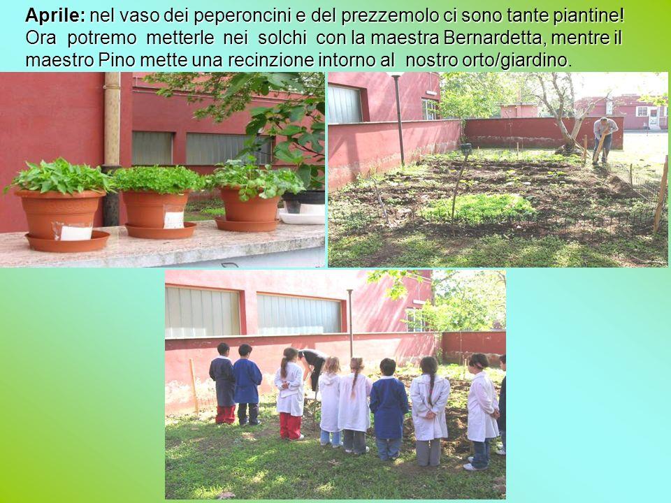 2° A-B Ida Del Vecchio Ogni giorno andiamo a controllare il nostro piccolo orto e innaffiamo le piantine.
