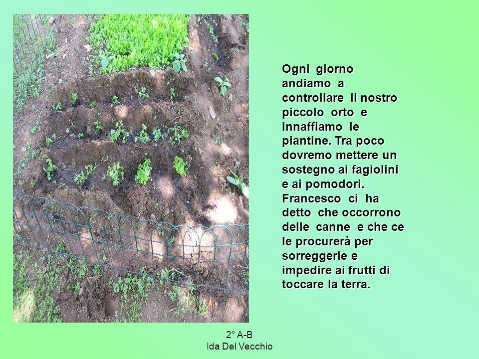 2° A-B Ida Del Vecchio Ogni giorno andiamo a controllare il nostro piccolo orto e innaffiamo le piantine. Tra poco dovremo mettere un sostegno ai fagi