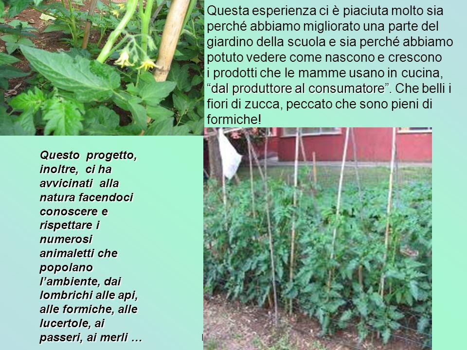 2° A-B Ida Del Vecchio dal produttore al consumatore. Questa esperienza ci è piaciuta molto sia perché abbiamo migliorato una parte del giardino della