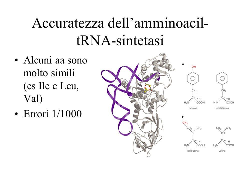 Accuratezza dellamminoacil- tRNA-sintetasi Alcuni aa sono molto simili (es Ile e Leu, Val) Errori 1/1000