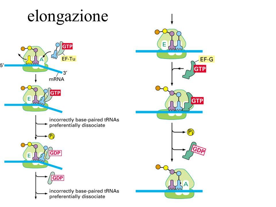 elongazione