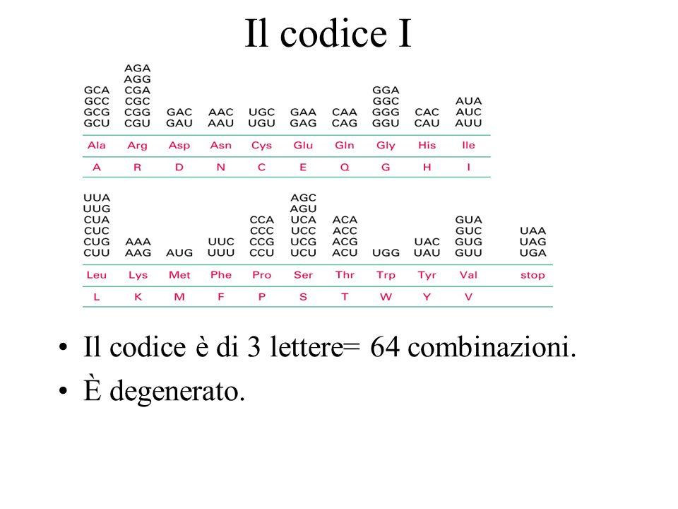 Il codice I Il codice è di 3 lettere= 64 combinazioni. È degenerato.