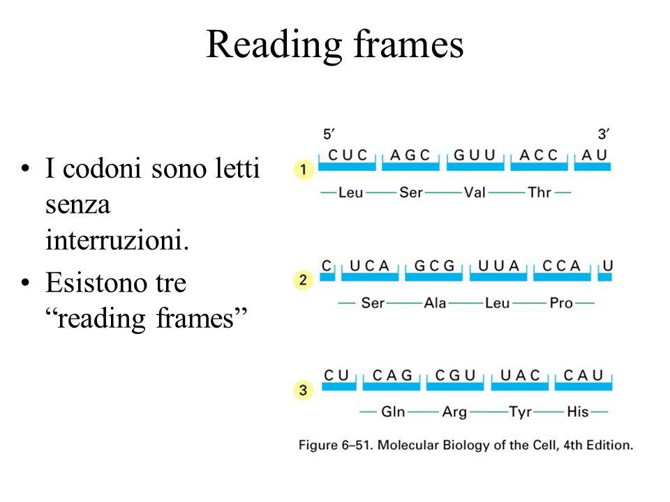 Reading frames I codoni sono letti senza interruzioni. Esistono tre reading frames