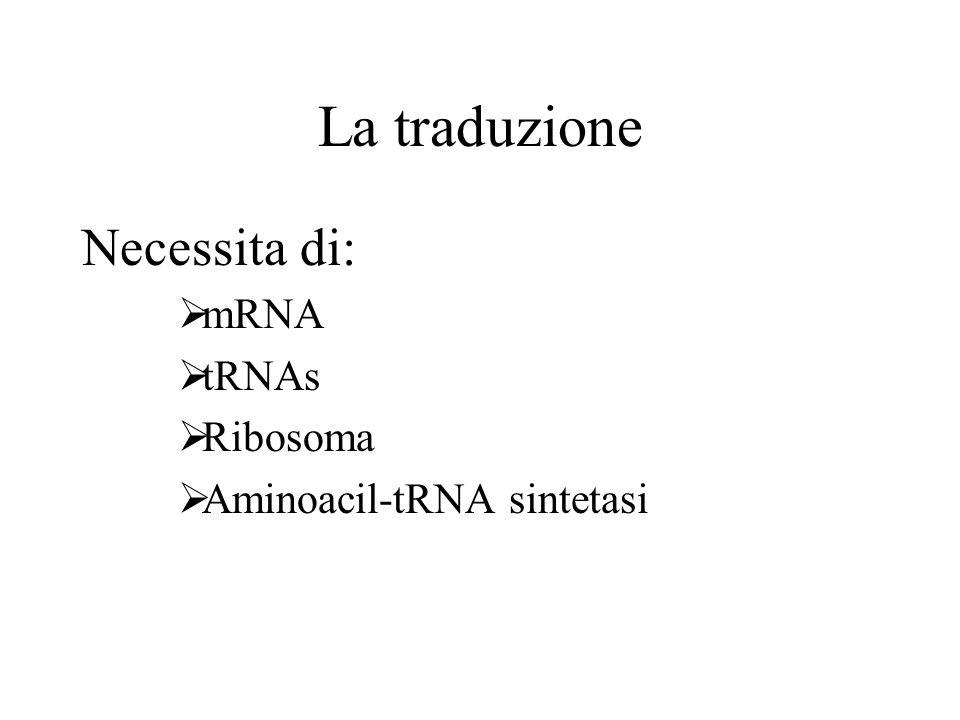La traduzione Necessita di: mRNA tRNAs Ribosoma Aminoacil-tRNA sintetasi