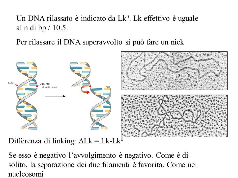 Un DNA rilassato è indicato da Lk 0. Lk effettivo è uguale al n di bp / 10.5. Per rilassare il DNA superavvolto si può fare un nick Differenza di link