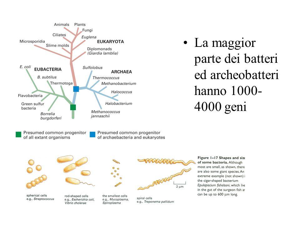 La maggior parte dei batteri ed archeobatteri hanno 1000- 4000 geni