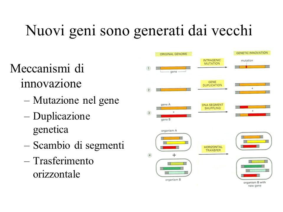 Nuovi geni sono generati dai vecchi Meccanismi di innovazione –Mutazione nel gene –Duplicazione genetica –Scambio di segmenti –Trasferimento orizzonta