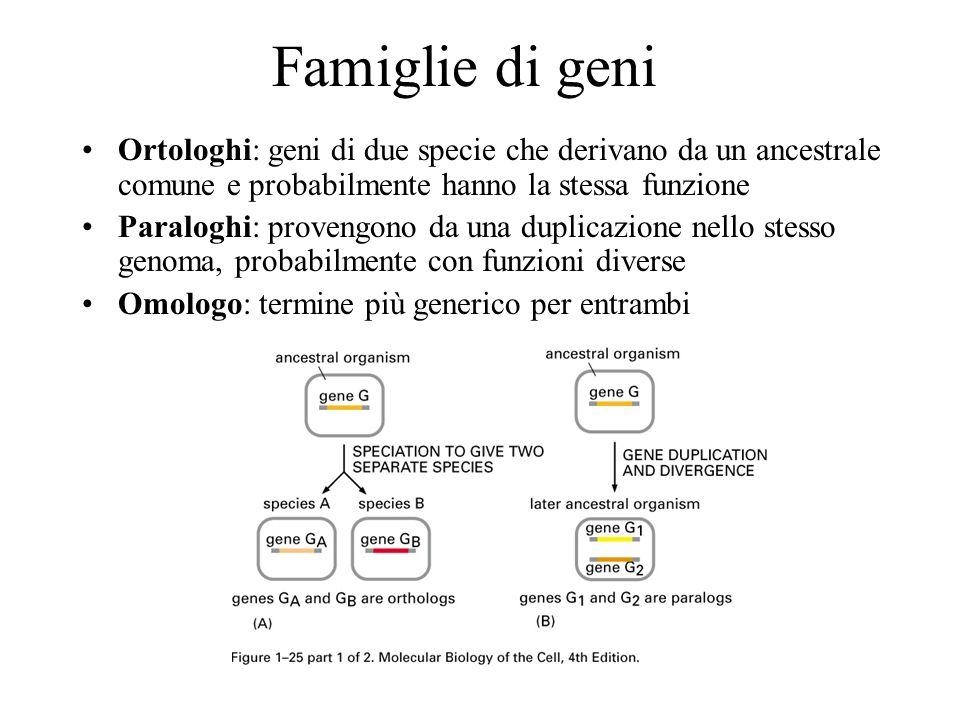 Famiglie di geni Ortologhi: geni di due specie che derivano da un ancestrale comune e probabilmente hanno la stessa funzione Paraloghi: provengono da