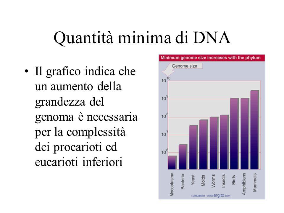 Quantità minima di DNA Il grafico indica che un aumento della grandezza del genoma è necessaria per la complessità dei procarioti ed eucarioti inferio