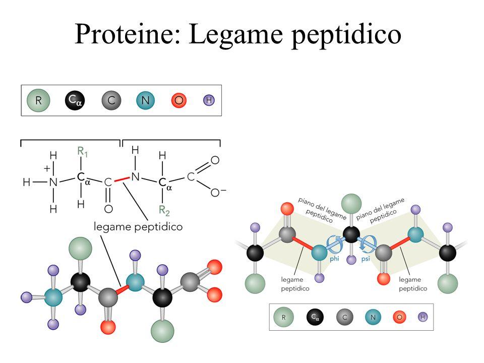 Topoisomerasi I Le topoisomerasi usano una tyr che opera un attacco nucleofilo al DNA.