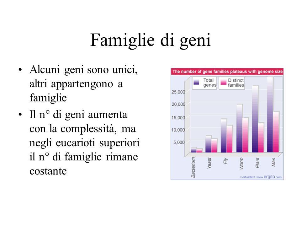 Famiglie di geni Alcuni geni sono unici, altri appartengono a famiglie Il n° di geni aumenta con la complessità, ma negli eucarioti superiori il n° di