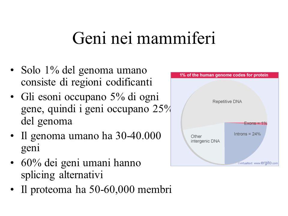 Geni nei mammiferi Solo 1% del genoma umano consiste di regioni codificanti Gli esoni occupano 5% di ogni gene, quindi i geni occupano 25% del genoma