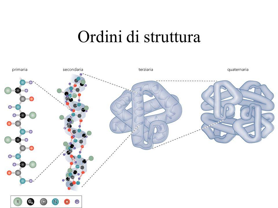 Strutture DNA La struttura B è la più comune La A è più compatta e fatta dallRNA La Z è levogira e fatta a Zig-Zag