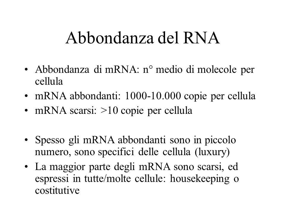 Abbondanza del RNA Abbondanza di mRNA: n° medio di molecole per cellula mRNA abbondanti: 1000-10.000 copie per cellula mRNA scarsi: >10 copie per cell
