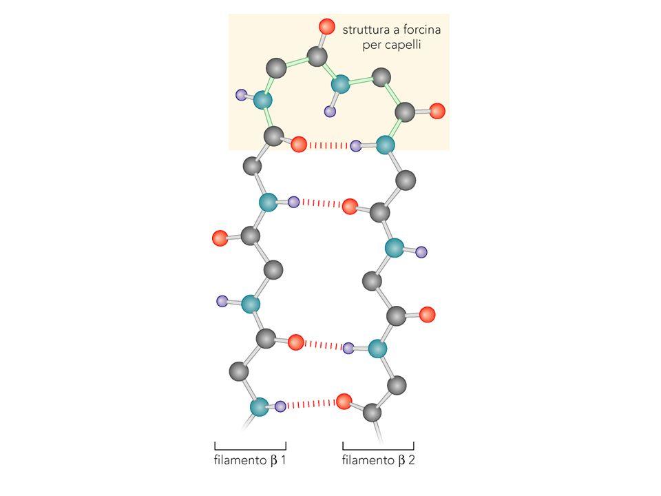 Topologia del DNA Linking number Lk: numero di volte che un filamento deve essere passato attraverso laltro per separare le due catene Twist number Tw: numero di volte che un filamento gira intorno allaltro Writhe number Wr: numero di incroci dellasse longitudinale Lk = Tw + Wr