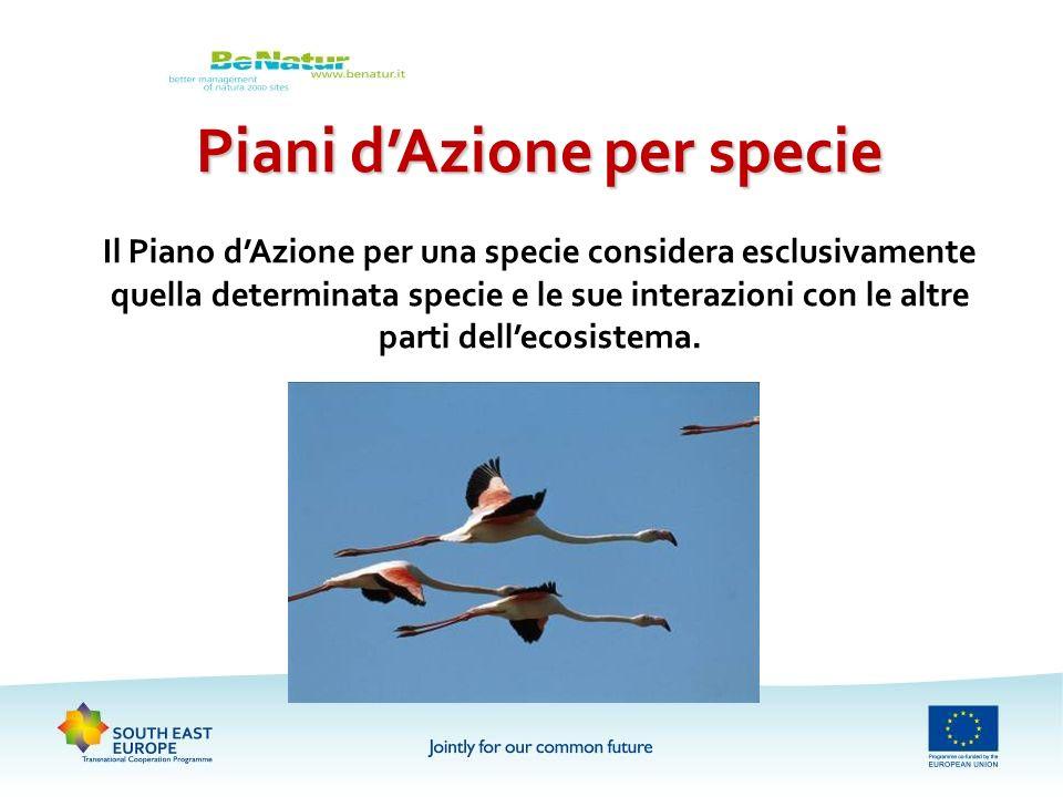 Piani dAzione per specie Il Piano dAzione per una specie considera esclusivamente quella determinata specie e le sue interazioni con le altre parti de