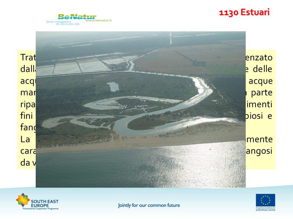 1130 Estuari Tratto terminale dei fiumi che sfociano in mare influenzato dalla azione delle maree che si estende sino al limite delle acque salmastre.