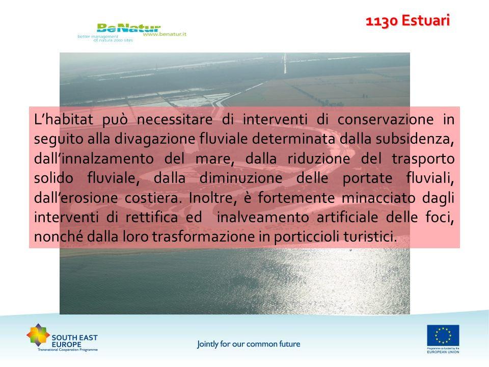 1130 Estuari Lhabitat può necessitare di interventi di conservazione in seguito alla divagazione fluviale determinata dalla subsidenza, dallinnalzamen