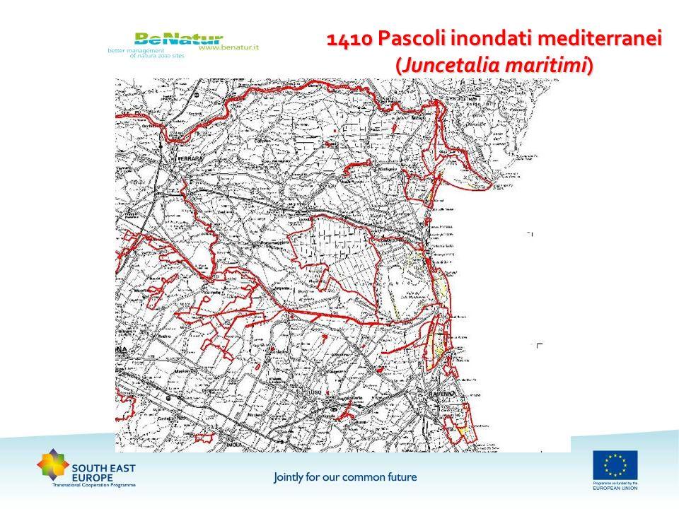1410 Pascoli inondati mediterranei (Juncetalia maritimi)