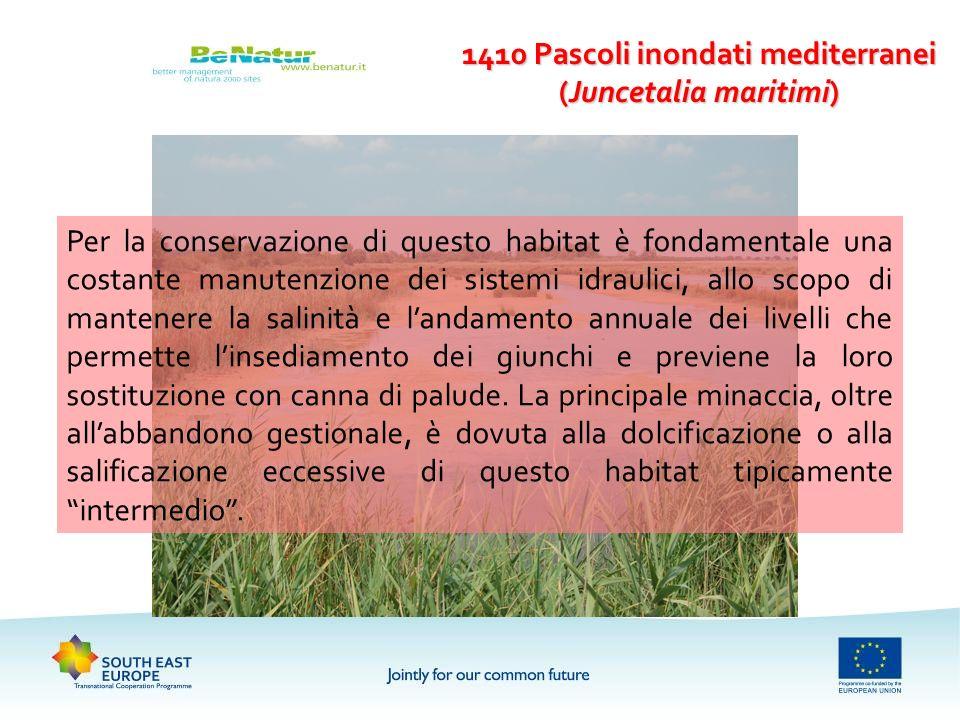 1410 Pascoli inondati mediterranei (Juncetalia maritimi) Per la conservazione di questo habitat è fondamentale una costante manutenzione dei sistemi i