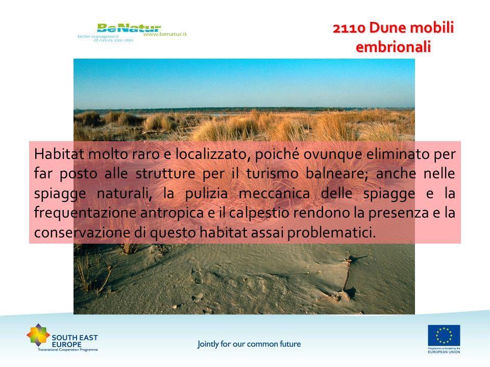 2110 Dune mobili embrionali Habitat molto raro e localizzato, poiché ovunque eliminato per far posto alle strutture per il turismo balneare; anche nel