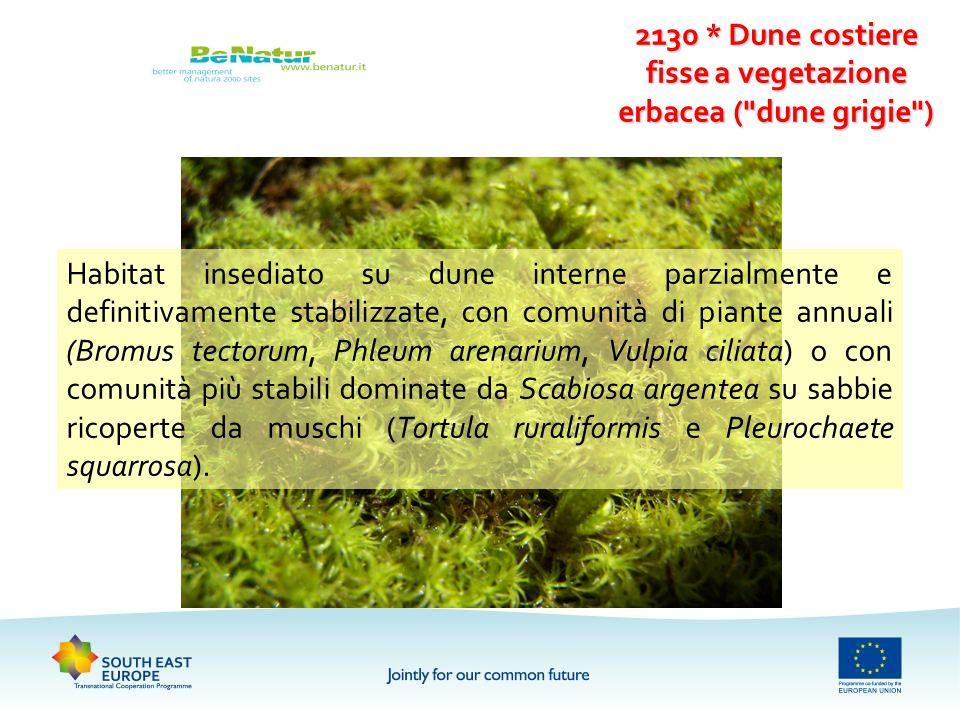 2130 * Dune costiere fisse a vegetazione erbacea (