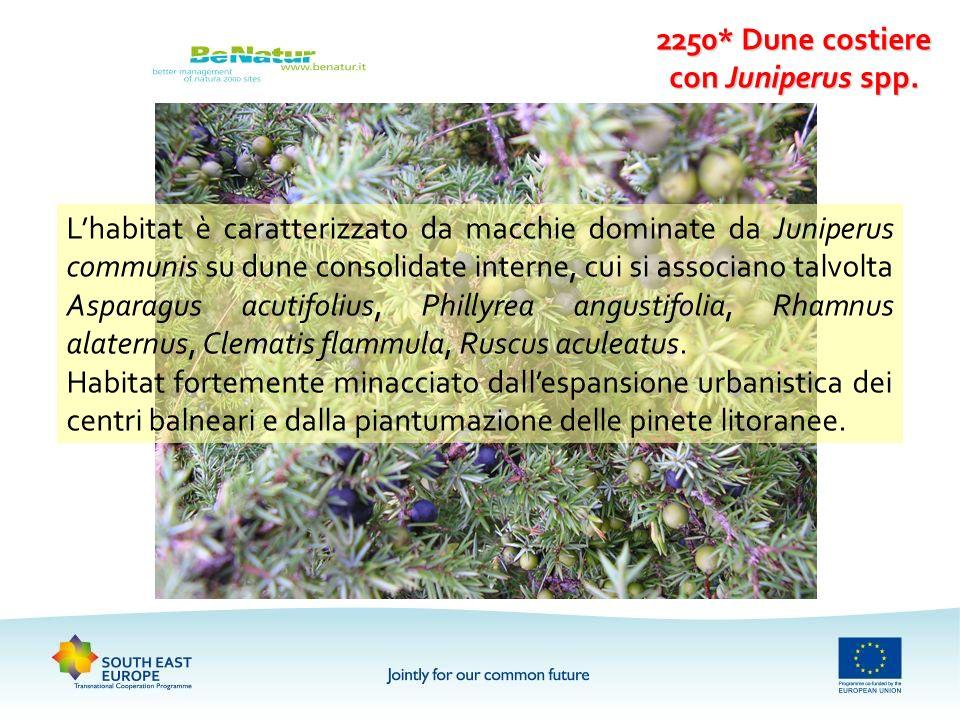 2250* Dune costiere con Juniperus spp. Lhabitat è caratterizzato da macchie dominate da Juniperus communis su dune consolidate interne, cui si associa