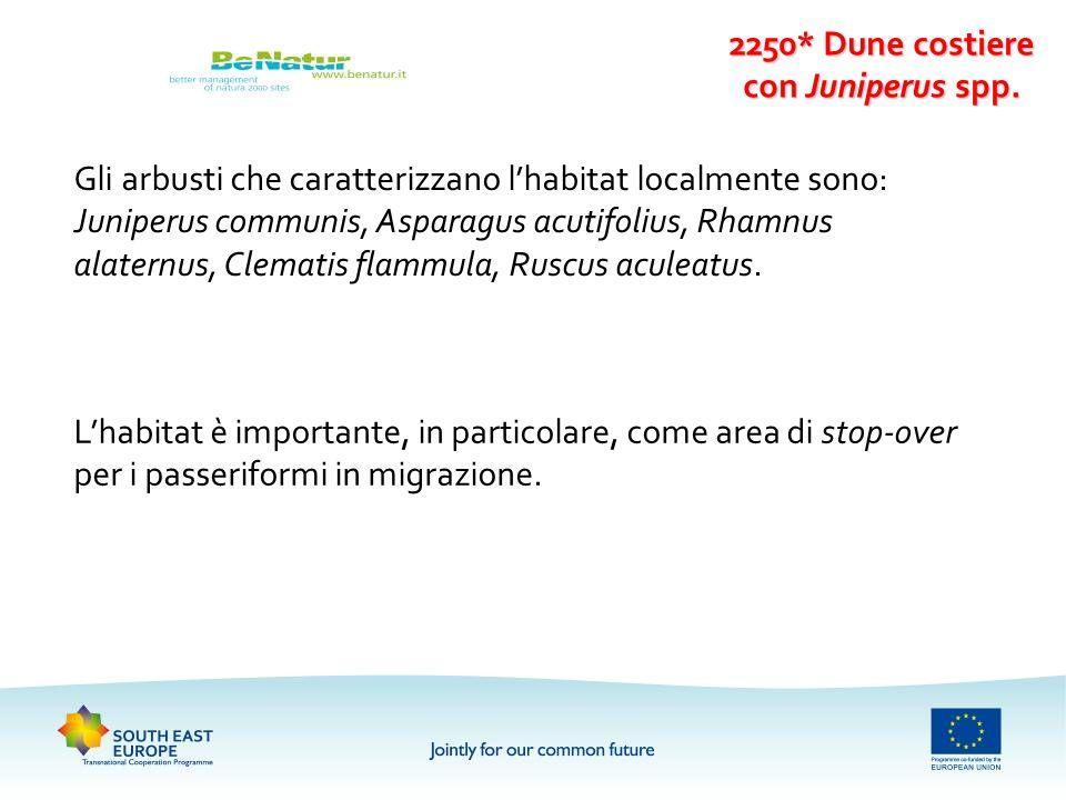 2250* Dune costiere con Juniperus spp. Gli arbusti che caratterizzano lhabitat localmente sono: Juniperus communis, Asparagus acutifolius, Rhamnus ala