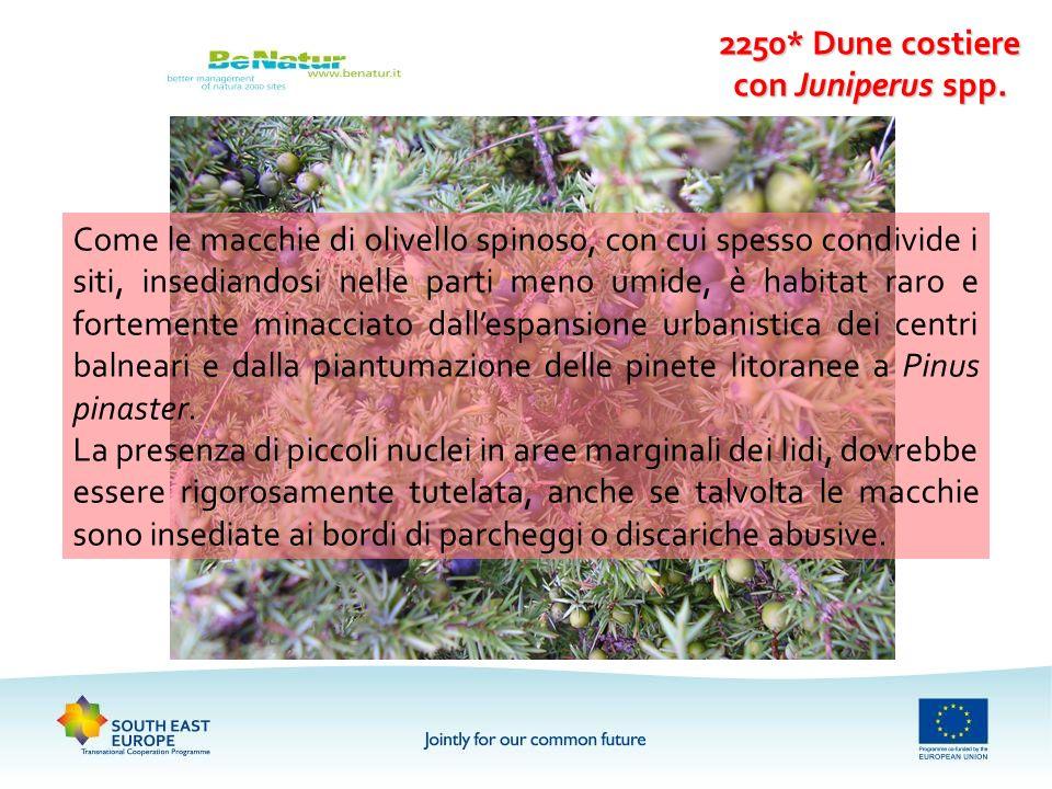 2250* Dune costiere con Juniperus spp. Come le macchie di olivello spinoso, con cui spesso condivide i siti, insediandosi nelle parti meno umide, è ha