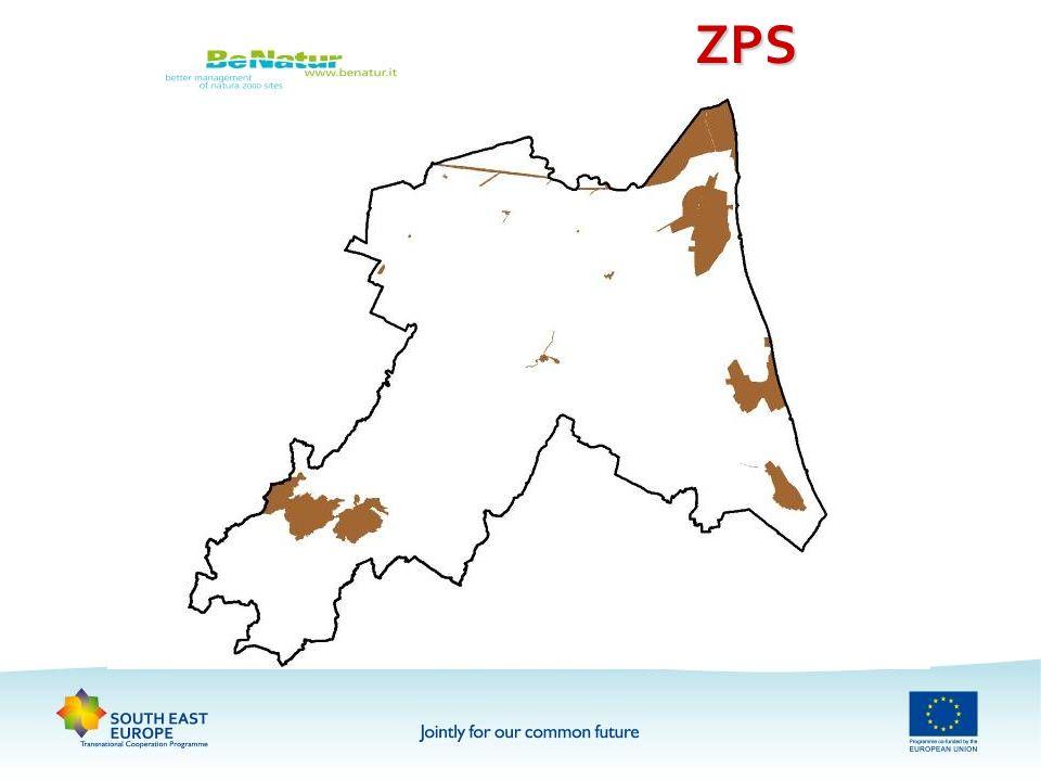 OBIETTIVO DEL PROGETTO affrontare e arrestare la perdità di biodiversità attraverso la definizione di azioni comuni per la conservazione del patrimonio naturale e del paesaggio nellEuropa sud- orientale, con particolare attenzione agli habitat e alle specie protetti dalle direttive 92/43/CEE e 09/147/UE e caratteristici delleco-regione Sud-Est europea o particolarmente minacciati dalle alterazioni ambientali causate dalle attività delluomoaffrontare e arrestare la perdità di biodiversità attraverso la definizione di azioni comuni per la conservazione del patrimonio naturale e del paesaggio nellEuropa sud- orientale, con particolare attenzione agli habitat e alle specie protetti dalle direttive 92/43/CEE e 09/147/UE e caratteristici delleco-regione Sud-Est europea o particolarmente minacciati dalle alterazioni ambientali causate dalle attività delluomo