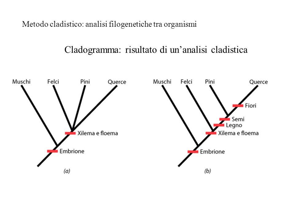Metodo cladistico: analisi filogenetiche tra organismi Cladogramma: risultato di unanalisi cladistica