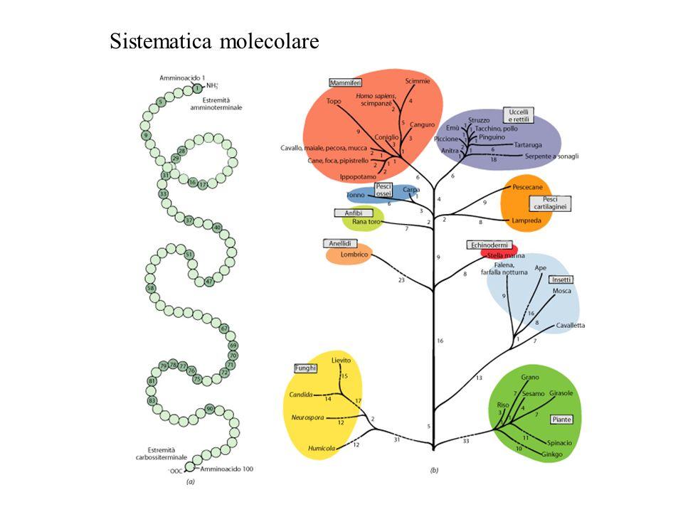 Sistematica molecolare