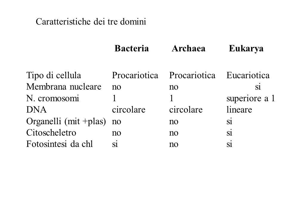 Caratteristiche dei tre domini Tipo di cellulaProcarioticaProcarioticaEucariotica Membrana nuclearenonosi N. cromosomi11superiore a 1 DNAcircolarecirc