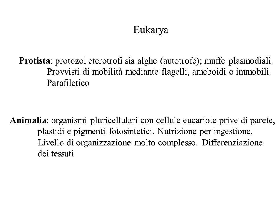 Eukarya Protista: protozoi eterotrofi sia alghe (autotrofe); muffe plasmodiali. Provvisti di mobilità mediante flagelli, ameboidi o immobili. Parafile