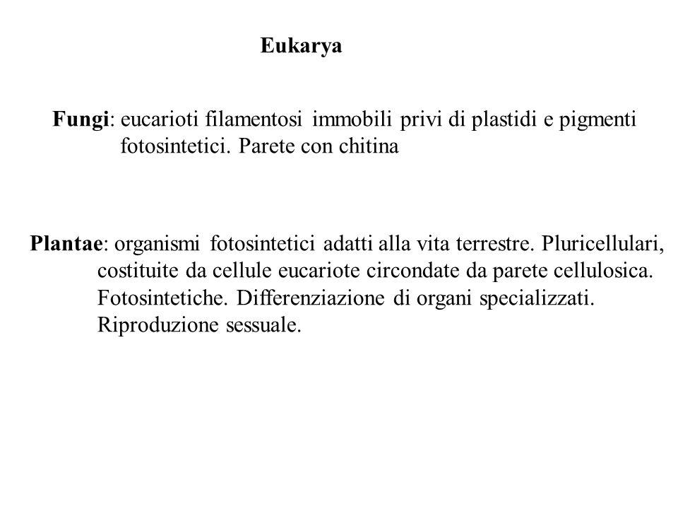 Fungi: eucarioti filamentosi immobili privi di plastidi e pigmenti fotosintetici. Parete con chitina Plantae: organismi fotosintetici adatti alla vita