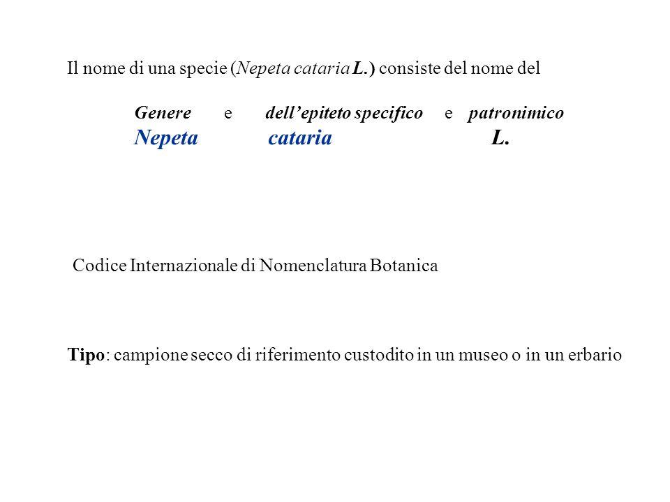 Il nome di una specie (Nepeta cataria L.) consiste del nome del Genere e dellepiteto specifico e patronimico Nepeta cataria L. Codice Internazionale d