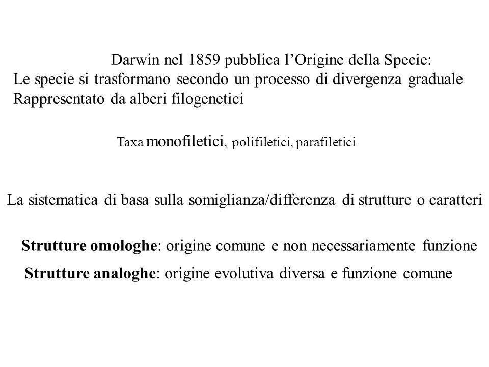 Darwin nel 1859 pubblica lOrigine della Specie: Le specie si trasformano secondo un processo di divergenza graduale Rappresentato da alberi filogeneti