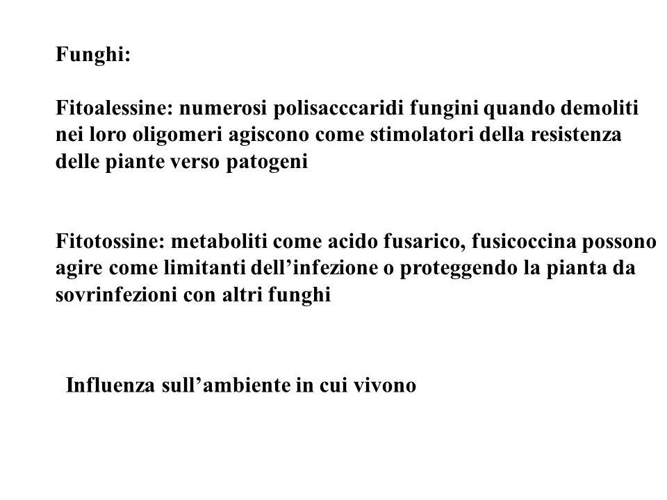Funghi: Fitoalessine: numerosi polisacccaridi fungini quando demoliti nei loro oligomeri agiscono come stimolatori della resistenza delle piante verso
