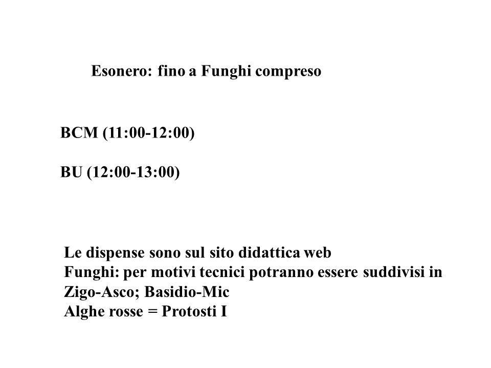 Esonero: fino a Funghi compreso BCM (11:00-12:00) BU (12:00-13:00) Le dispense sono sul sito didattica web Funghi: per motivi tecnici potranno essere
