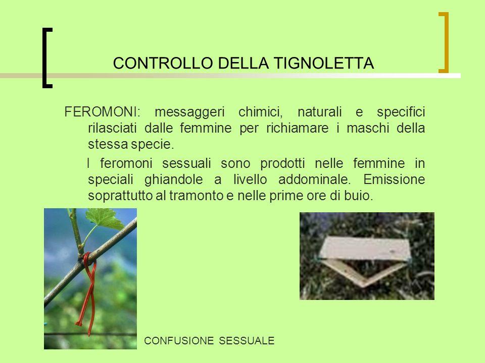 CONTROLLO DELLA TIGNOLETTA FEROMONI: messaggeri chimici, naturali e specifici rilasciati dalle femmine per richiamare i maschi della stessa specie. I