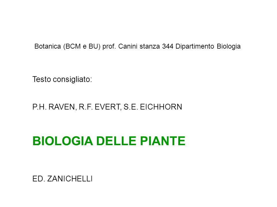Testo consigliato: P.H. RAVEN, R.F. EVERT, S.E. EICHHORN BIOLOGIA DELLE PIANTE ED. ZANICHELLI Botanica (BCM e BU) prof. Canini stanza 344 Dipartimento