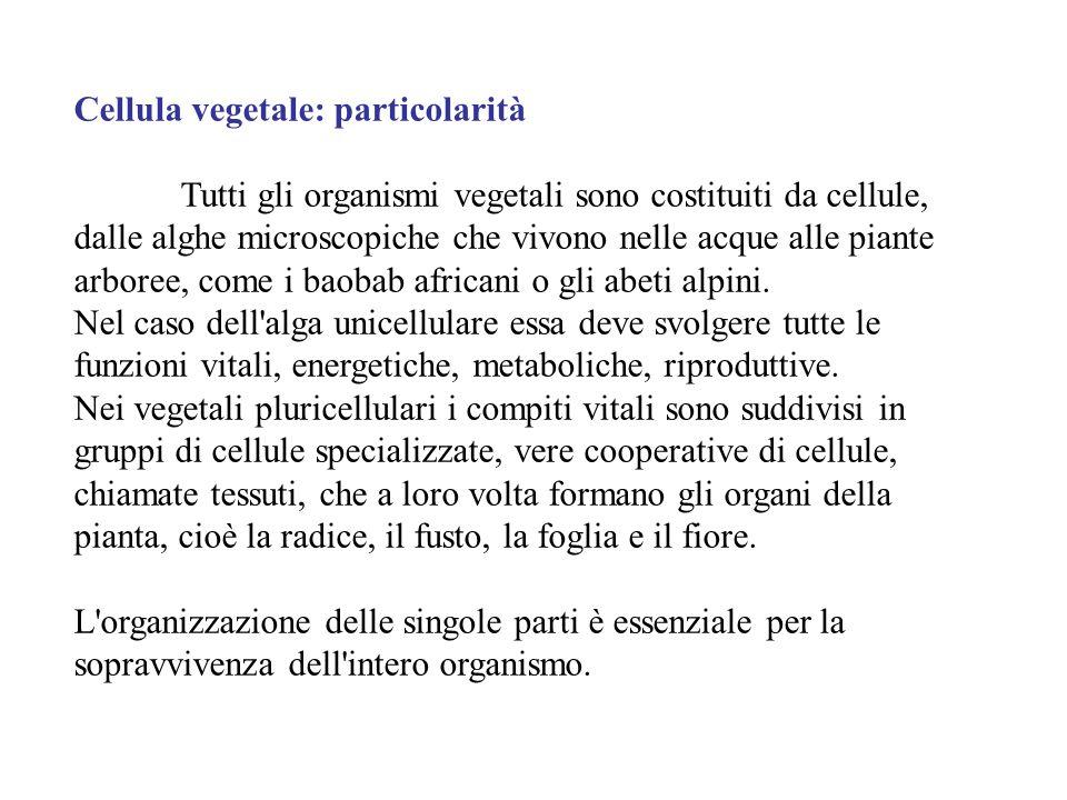 Cellula vegetale: particolarità Tutti gli organismi vegetali sono costituiti da cellule, dalle alghe microscopiche che vivono nelle acque alle piante