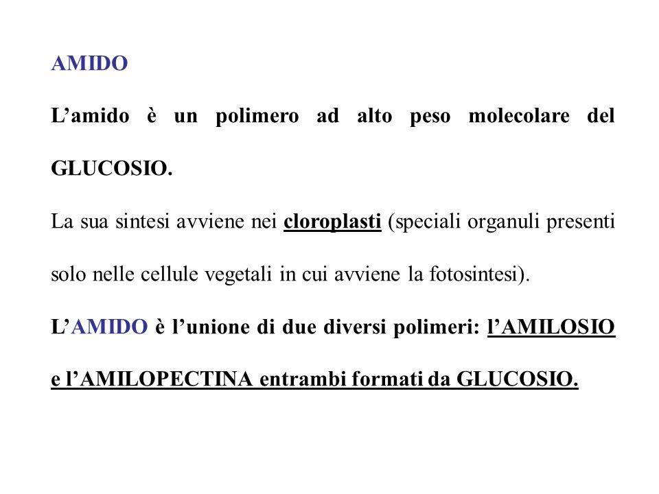 AMIDO Lamido è un polimero ad alto peso molecolare del GLUCOSIO. La sua sintesi avviene nei cloroplasti (speciali organuli presenti solo nelle cellule