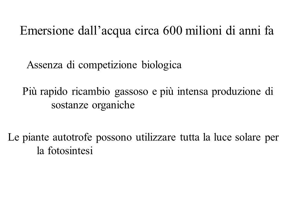 Emersione dallacqua circa 600 milioni di anni fa Assenza di competizione biologica Più rapido ricambio gassoso e più intensa produzione di sostanze or