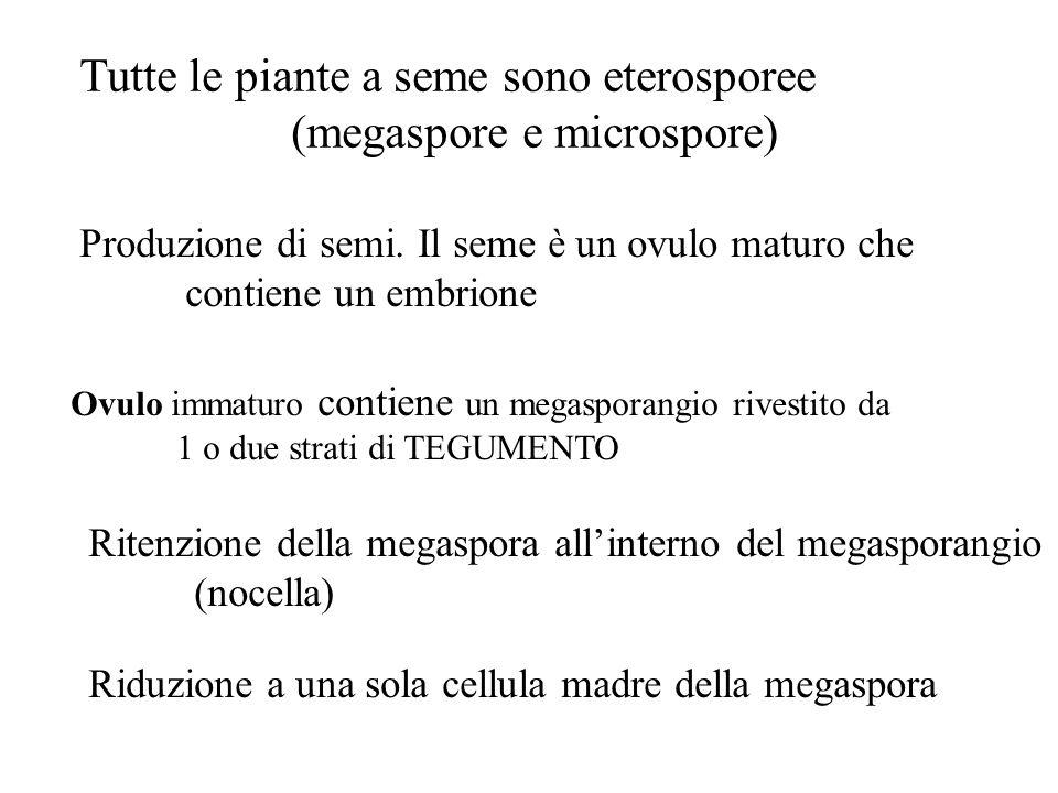 Tutte le piante a seme sono eterosporee (megaspore e microspore) Produzione di semi. Il seme è un ovulo maturo che contiene un embrione Ovulo immaturo