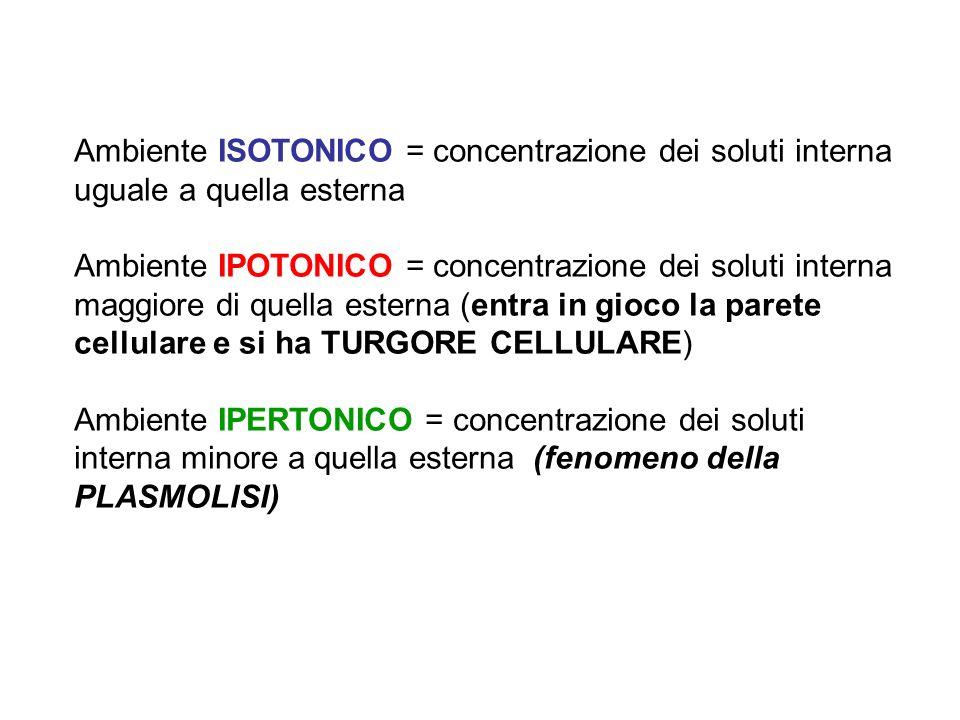 Ambiente ISOTONICO = concentrazione dei soluti interna uguale a quella esterna Ambiente IPOTONICO = concentrazione dei soluti interna maggiore di quel