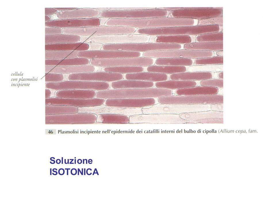 Soluzione ISOTONICA