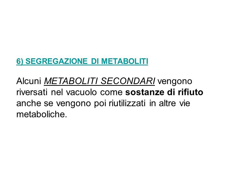 6) SEGREGAZIONE DI METABOLITI Alcuni METABOLITI SECONDARI vengono riversati nel vacuolo come sostanze di rifiuto anche se vengono poi riutilizzati in